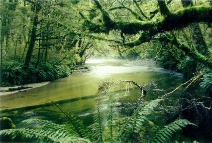 Amazon-Rainforest-4