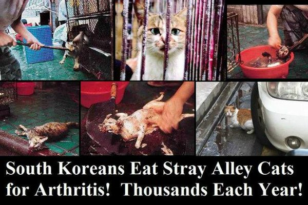 Korea Eat Dogs And Cats