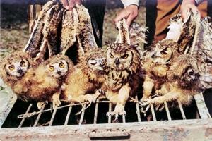 owl300_1351965404