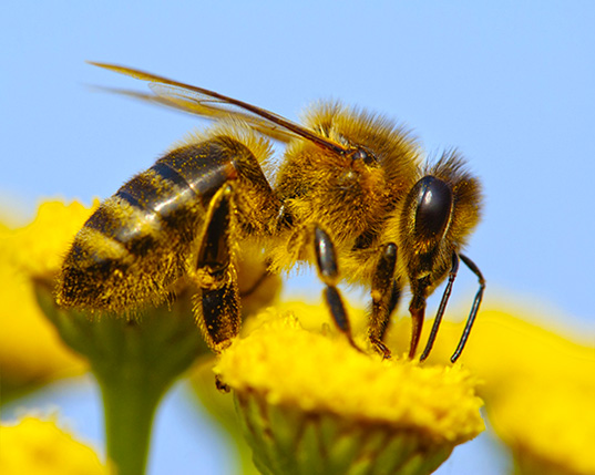 Environmentalist-sues-to-get-bumble-bee-listed-as-endangered-2