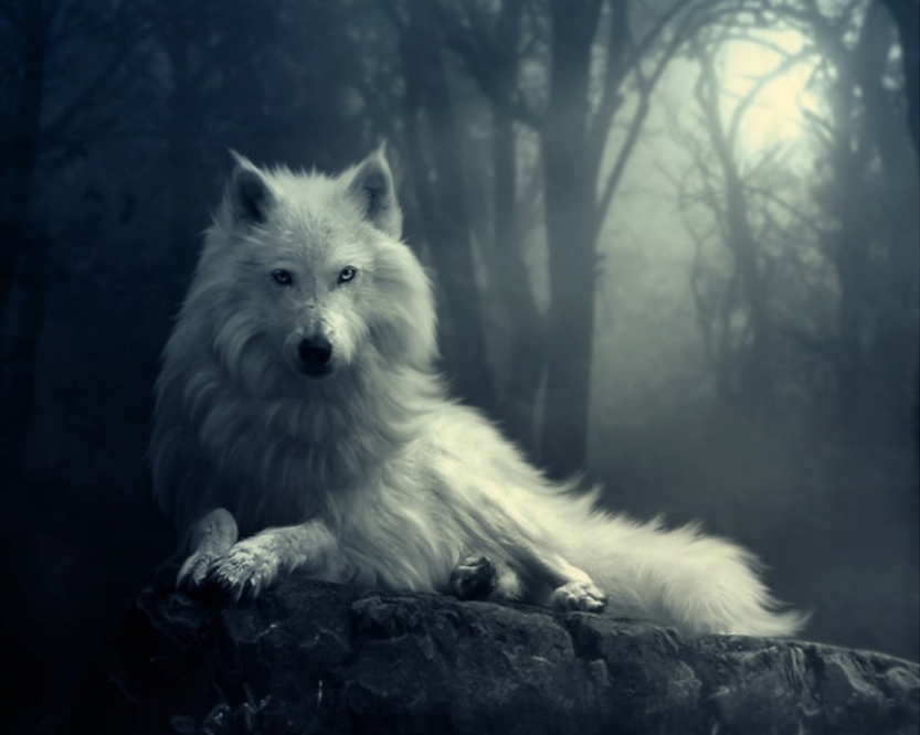 6984536-mysterious-wolf