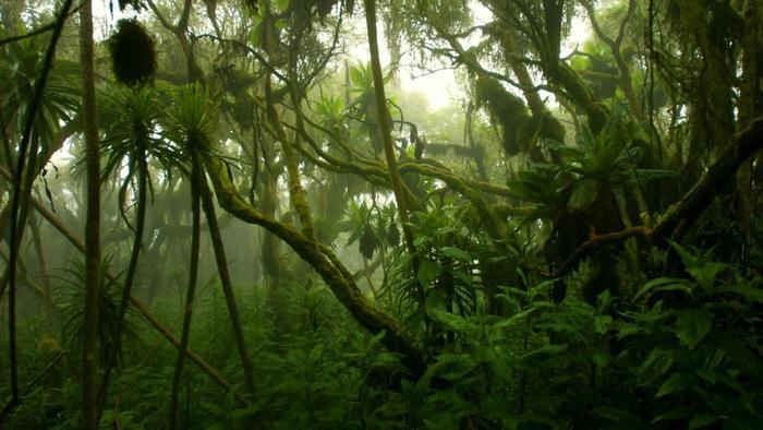 congo-rainforest-climate_de94c6611766c4ac.jpg