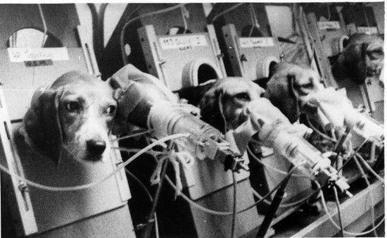 animal-testing-1.jpg
