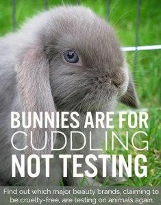 bunny-animal-testing