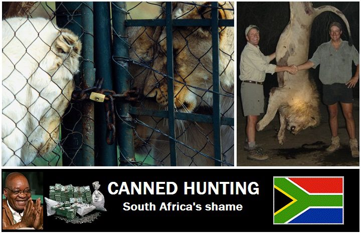 canned-hunting.jpg