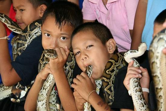 Cobra-Village-Thailand-550x367