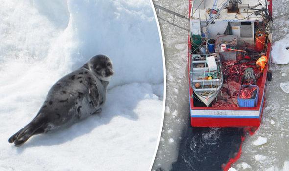 Seal-slaughter-660801 (1).jpg