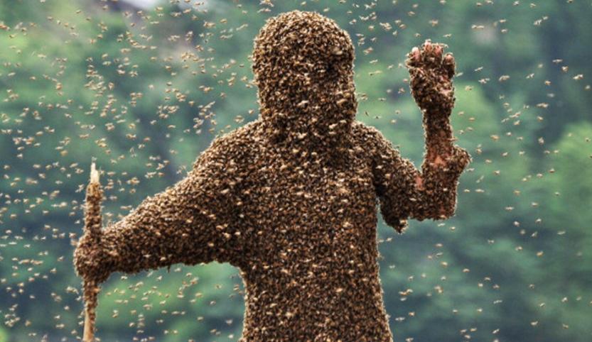 AZ-Bee-Attack.jpg