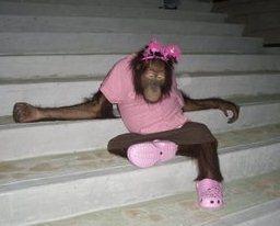 pony-orangutan-082312