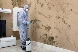 How-to-Get-Rid-of-Black-Mold_-Professional-Treatment