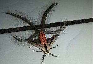 moth-e1508850985408
