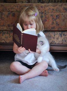 ede5b6b6645e27b3c18e31f712e505a5--ragdoll-kittens
